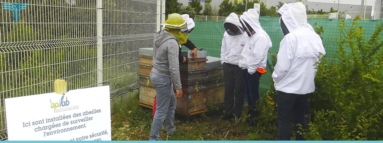 Programme collectif de bio-surveillance environnementale apicole
